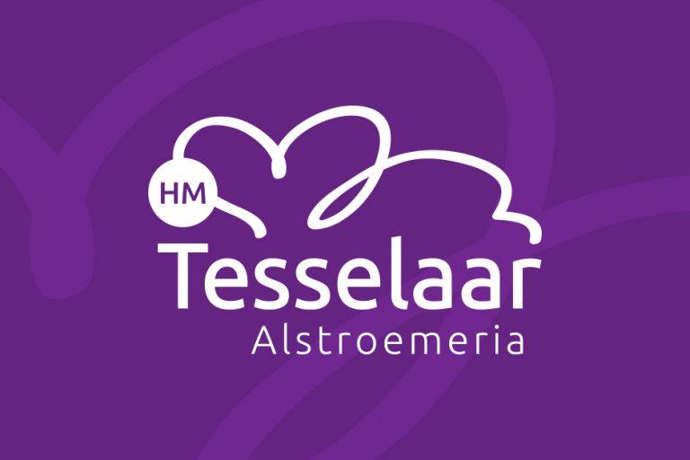 SEO Schagen website Tesselaar